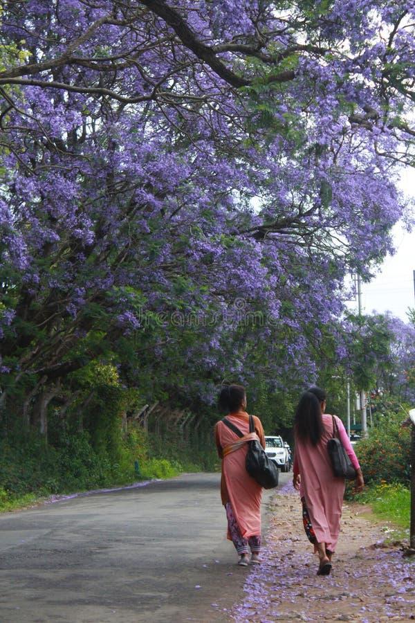 Duas meninas de Khasi no jainsem sob as flores gulmohar azuis fotos de stock