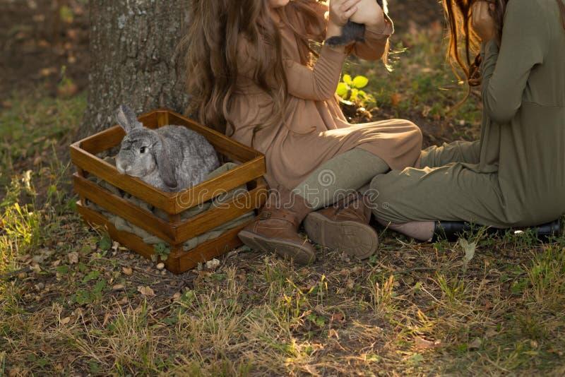 Duas meninas estão sentando-se sob uma árvore nos coelhos pequenos da grama e das trocas de carícias, guardando um grande coelho  fotos de stock