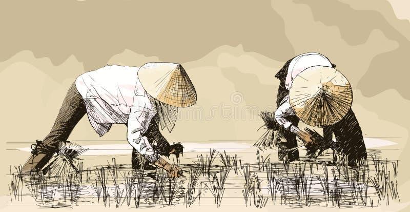 Duas mulheres que colhem o arroz em Ásia ilustração stock