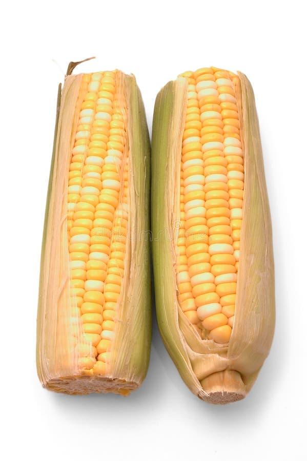 Duas orelhas de milho sobre o branco fotografia de stock royalty free
