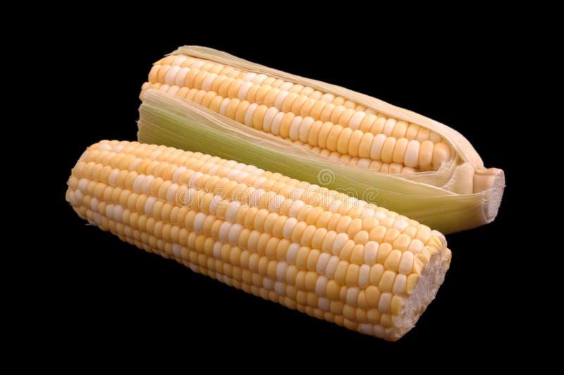 Duas orelhas de milho sobre o preto fotografia de stock
