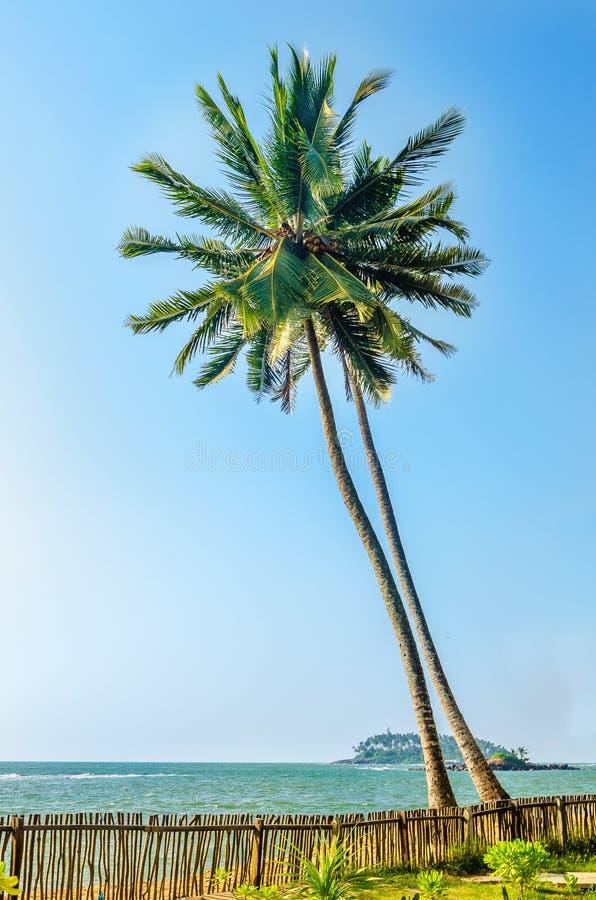 Duas palmas de coco altas bonitas no por do sol fotografia de stock royalty free