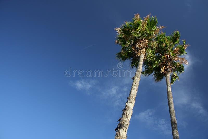 Duas palmeiras foto de stock royalty free