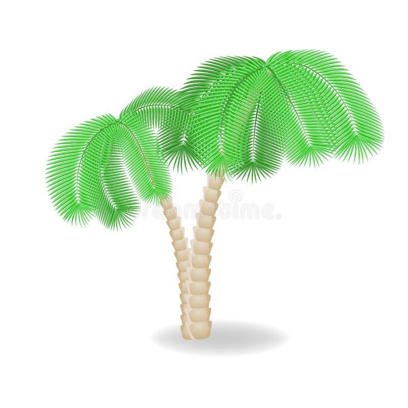 Duas palmeiras da curvatura. Ilustração do vetor ilustração do vetor