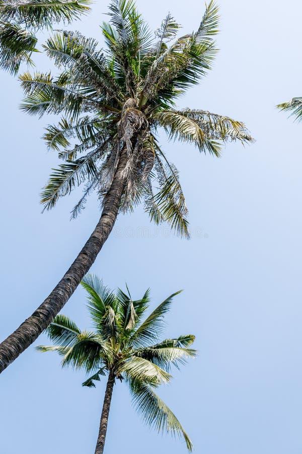 Duas palmeiras do coco contra o céu azul brilhante Curso, conceito das férias fotos de stock royalty free