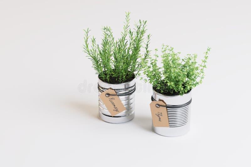 Duas plantas em uns potenciômetros foto de stock