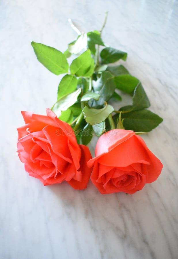 Duas rosas brilhantes no mármore imagens de stock royalty free