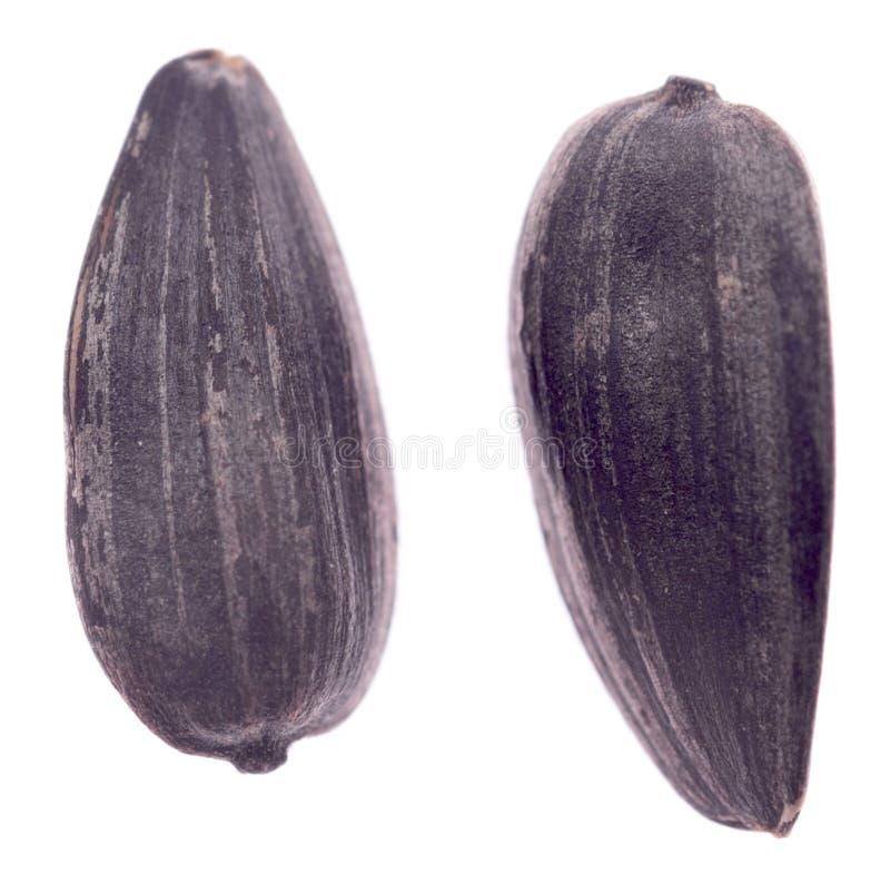 Duas sementes de girassol foto de stock