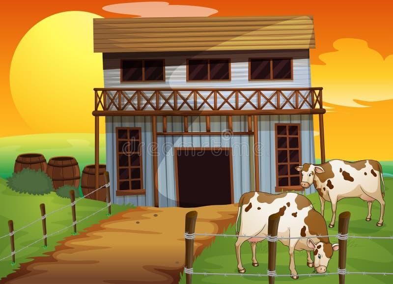 Duas vacas na exploração agrícola ilustração royalty free