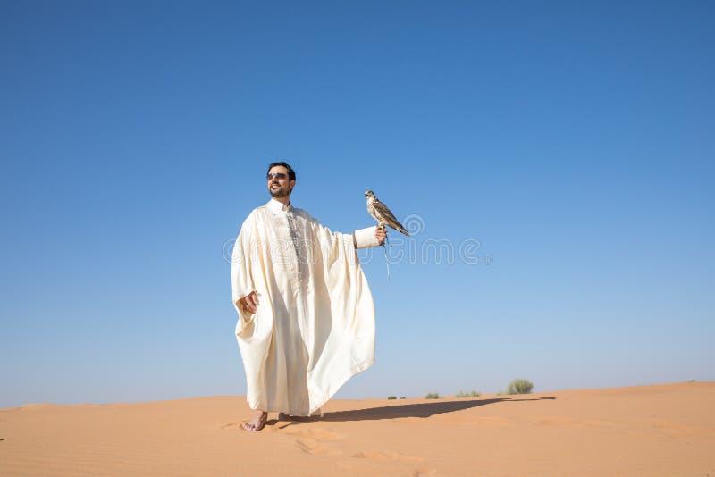 Dubaï, Emirats Arabes Unis - 2 décembre 2016 Un faucon pendant une formation de fauconnerie dans le désert attrapant un attrait images libres de droits