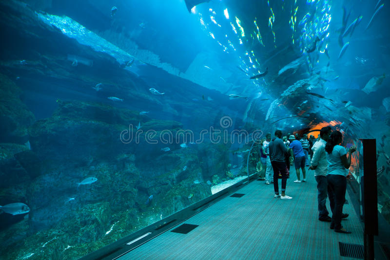 Dubai Aquarium royalty free stock photo