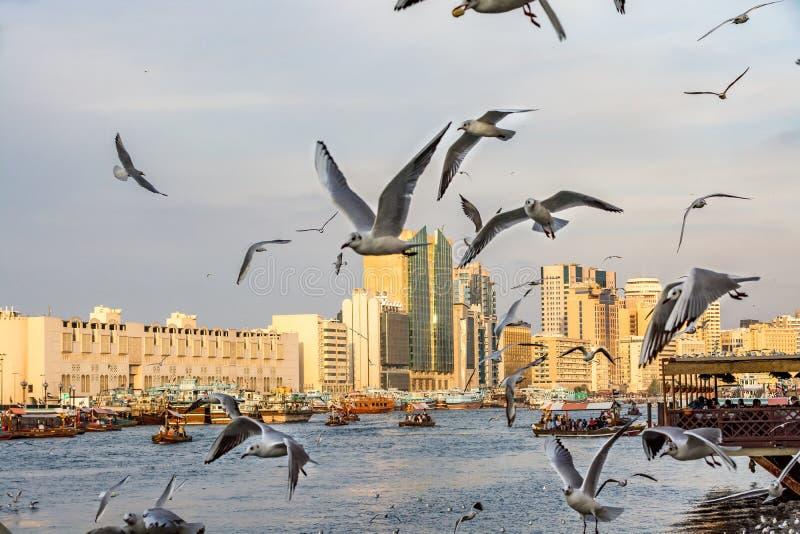 Dubai Creek avec un bon nombre de mouettes et de bateaux d'abra au coucher du soleil, Emirats Arabes Unis images libres de droits