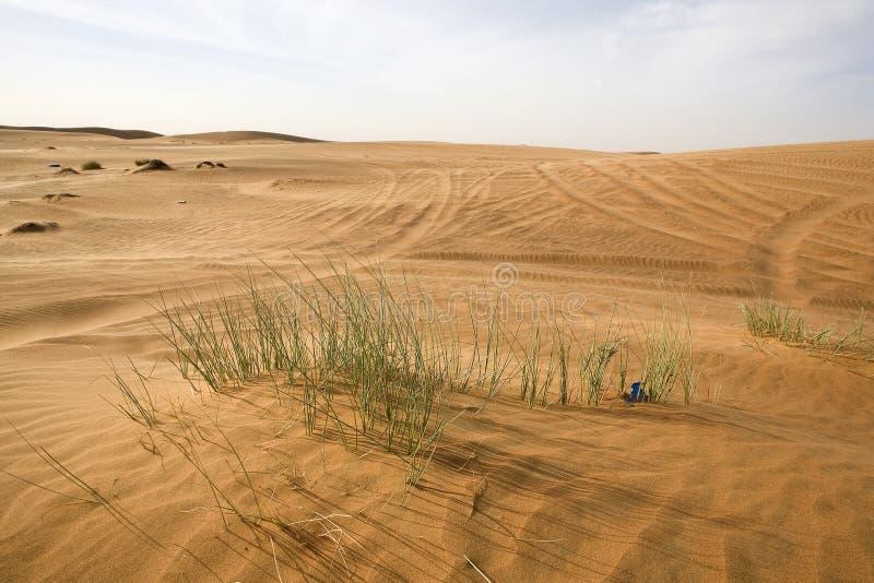 Dubai desert. Landscape of Dubai desert with vegetation royalty free stock photography