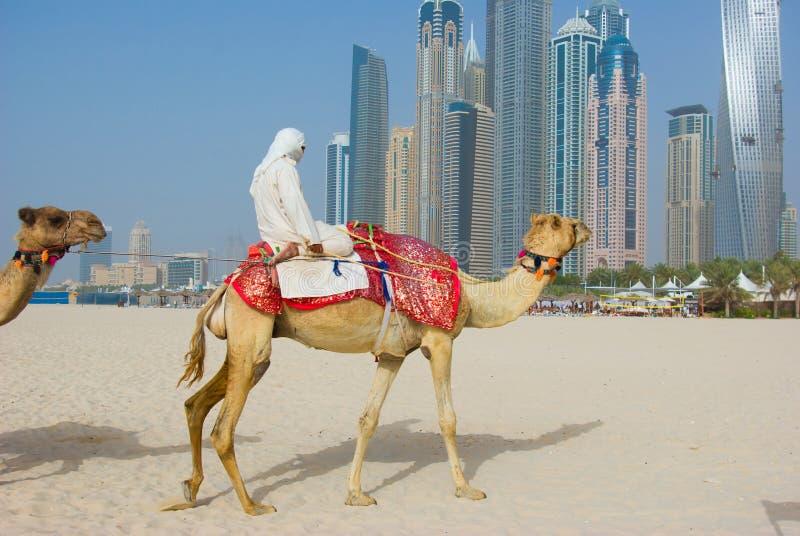Dubai-Kamel auf dem Stadtscape stockbild