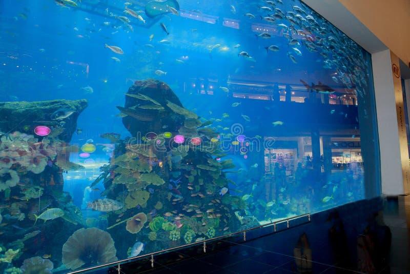 Dubai mall aquarium royalty free stock photo
