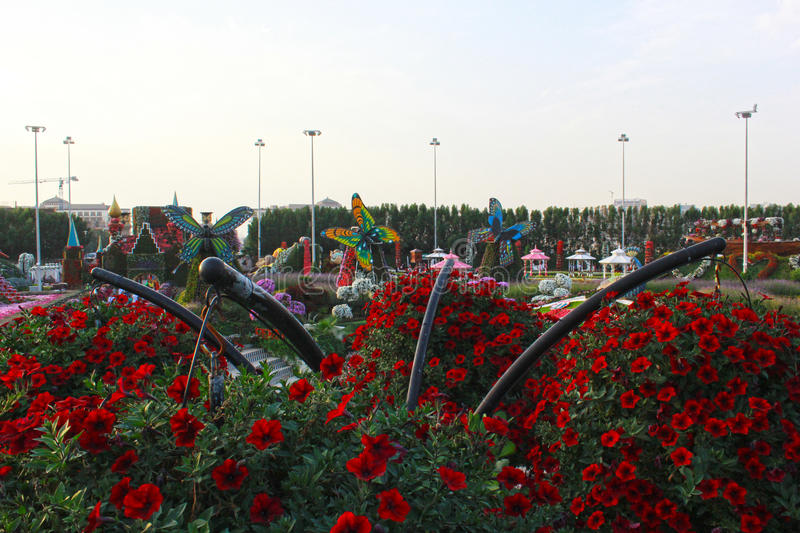 Dubai miracle garden with over 45 million flowers in a sunny day on November 24 2015 United Arab Emirates royalty free stock images