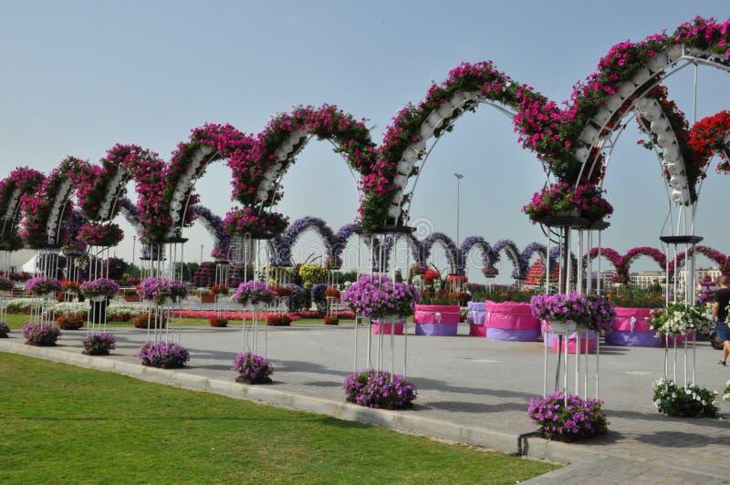 Dubai Miracle Garden in the UAE royalty free stock photos