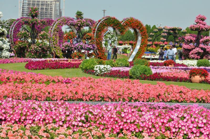 Dubai Miracle Garden in the UAE stock photography