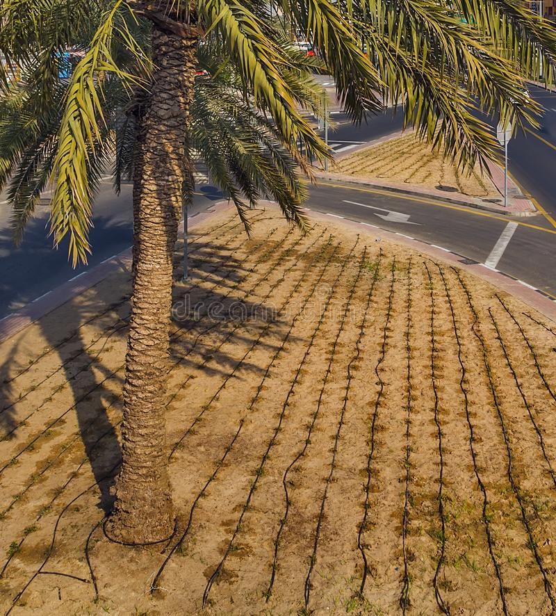 Dubai-Straßenwassernase Bewässerungssystem stockfoto