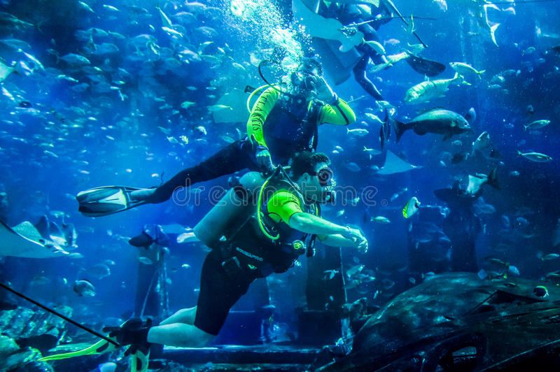 Dubai. Summer 2016. Instructor teaches man diving with the fishes in the huge aquarium at Atlantis The Palm. stock image