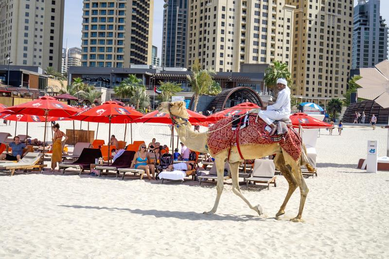 Dubai,UAE / 10.31.2018 : autentic camel ride on the jumeirah JBR beach with an arabian man on the camel stock photo
