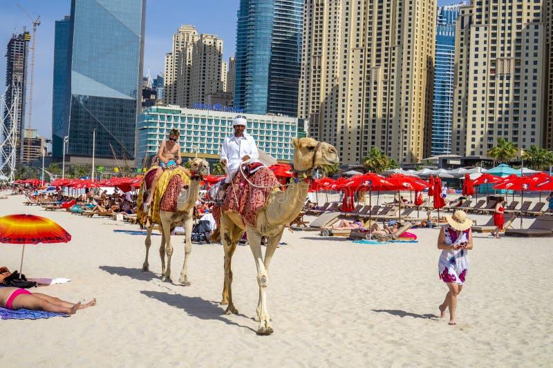 Dubai UAE/10 31 2018: autentic kamelritt på stranden för jumeirah JBR med en arabisk man på kamlet royaltyfria foton