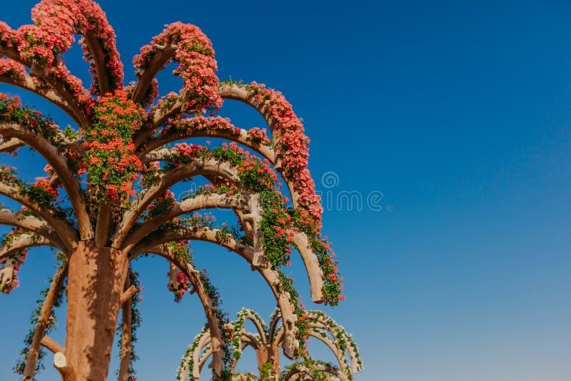 DUBAI, UAE - 5 de janeiro de 2019: Jardim do milagre de Dubai com as mais de 45 milhão flores em um dia ensolarado, Emiratos Árab fotografia de stock