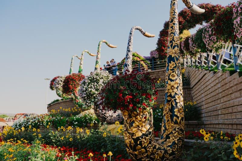 DUBAI, UAE - 5 de janeiro de 2019: Jardim do milagre de Dubai com as mais de 45 milh?o flores em um dia ensolarado, Emiratos ?rab foto de stock royalty free