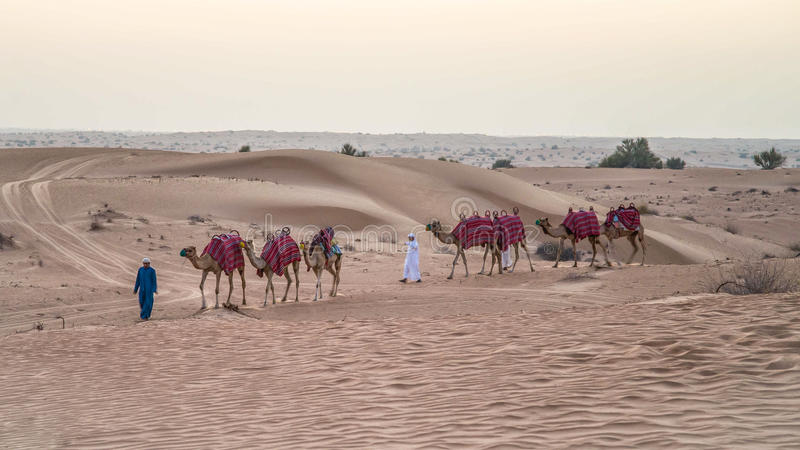 Dubai, UAE - 1 de junio de 2013: Caravana con los camellos en el desierto árabe imágenes de archivo libres de regalías