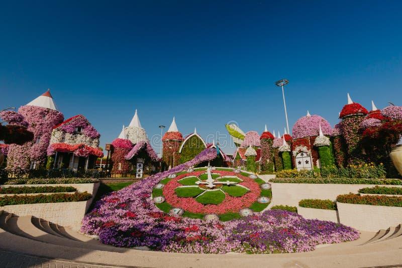 DUBAI UAE - Januari 05, 2019: Dubai mirakelträdgård med över 45 miljon blommor i en solig dag, Förenade Arabemiraten arkivbilder