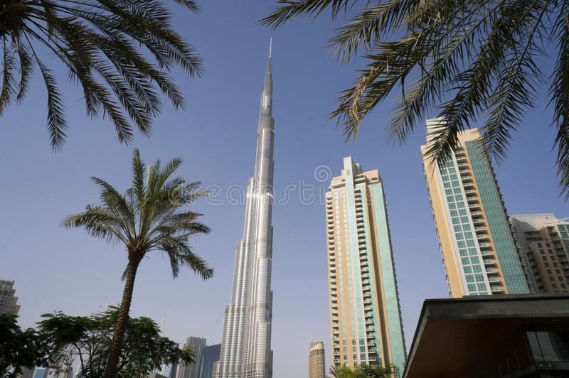 Dubai, UAE - January 15, 2016: Burj Khalifa tower. Burj Khalifa skyscraper against palm trees in the center of Dubai royalty free stock photo