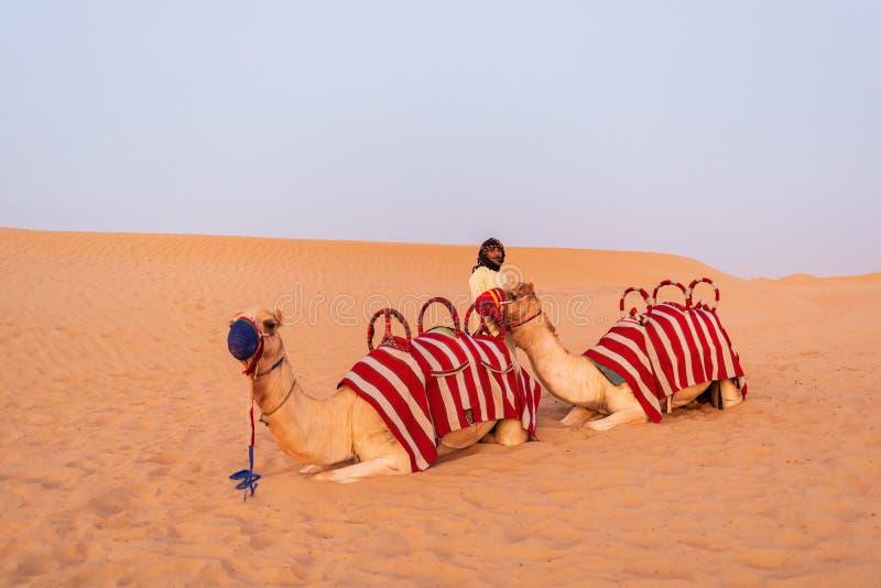 DUBAI UAE - November 09, 2018: Kamelhusvagn med arabiska män som väntar på turister att rida till och med sanddyn i den Dubai ökn fotografering för bildbyråer
