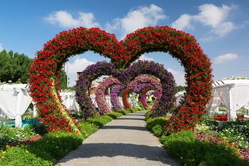 Download DUBAI, UNITED ARAB EMIRATES   DECEMBER 8, 2016: Dubai Miracle  Garden Is