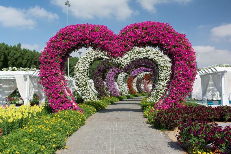 DUBAI, VEREINIGTE ARABISCHE EMIRATE - 8. DEZEMBER 2016: Dubai-Wunder-Garten ist der größte natürliche Blumengarten in der Welt stockfoto