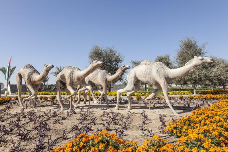 Dubaj wielbłąda rasy klub obrazy stock