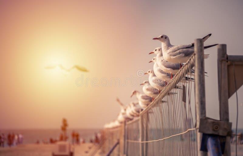 Dubaj, Zjednoczone Emiraty Arabskie - W doskonalić rzędzie fotografia royalty free