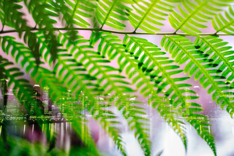 Dubbel exponering av det gröna bladet och staden arkivfoton