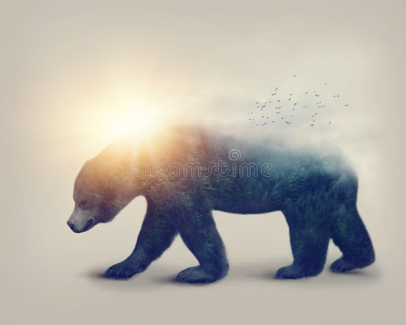 Dubbel exponering med en björn royaltyfria bilder
