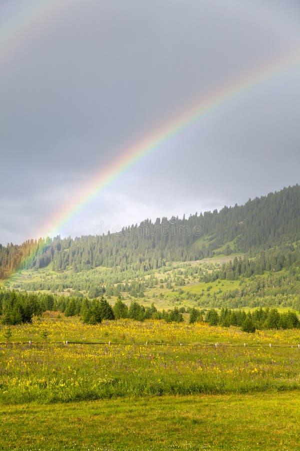 Dubbel regnbåge över äng och skog arkivfoton