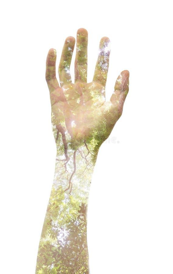 Dubbele blootstelling die van een hand en een boom, de macht vertegenwoordigen aan vector illustratie