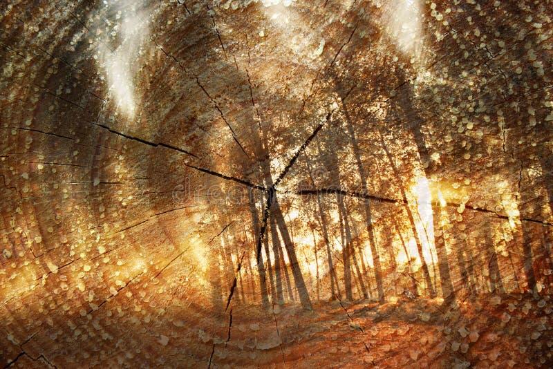 Dubbele blootstelling van bomen bij hout en de boomstam van de Besnoeiingsboom De achtergrond van de aard royalty-vrije stock afbeeldingen