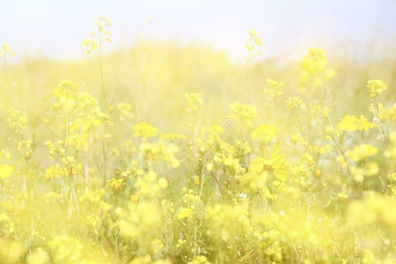 Dubbele blootstelling van de bloei van het bloemgebied, die tot abstracte en dromerige foto leiden royalty-vrije stock fotografie
