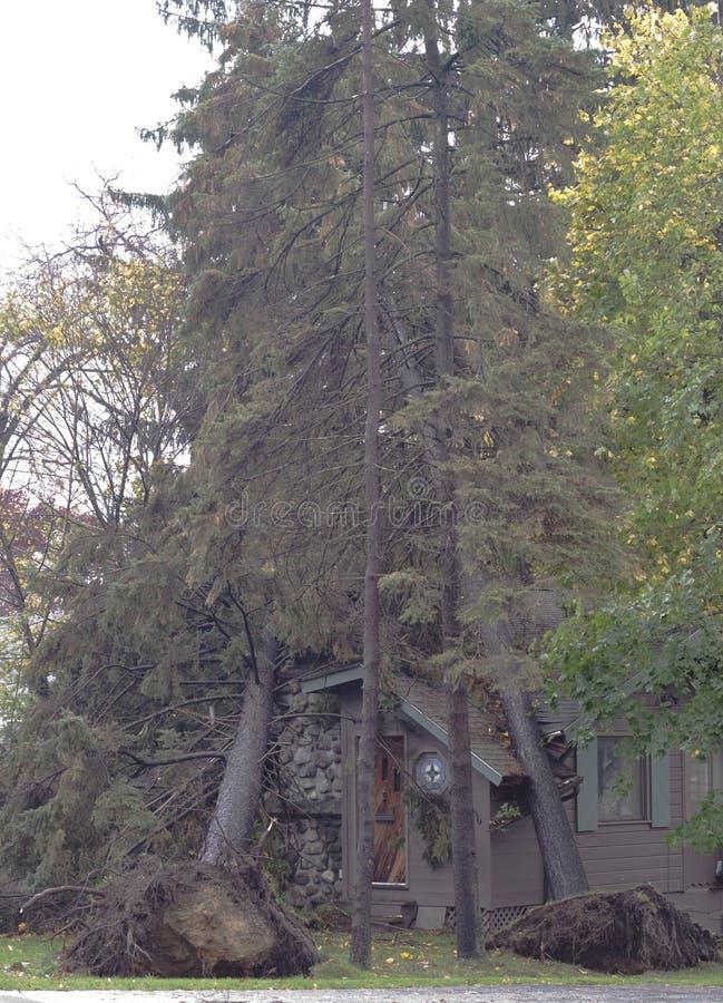 Dubbele boom die van Zandige orkaan wordt geraakt royalty-vrije stock foto