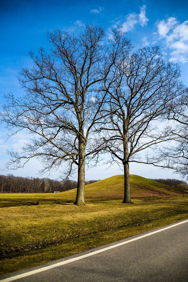 dubbla trees fotografering för bildbyråer
