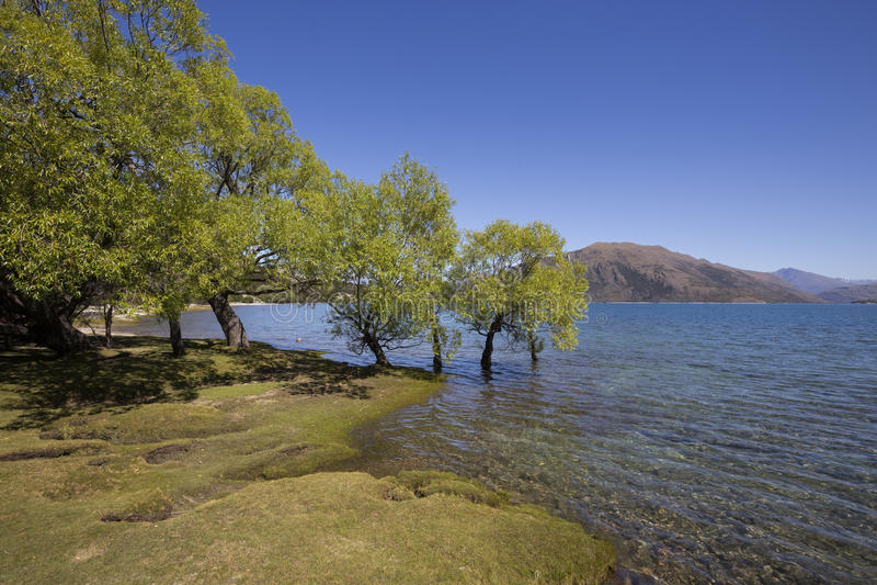 Dublin Bay, lago Wanaka, NZ fotografia stock