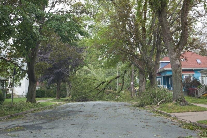 Tree down on Dublin Street Halifax stock photography