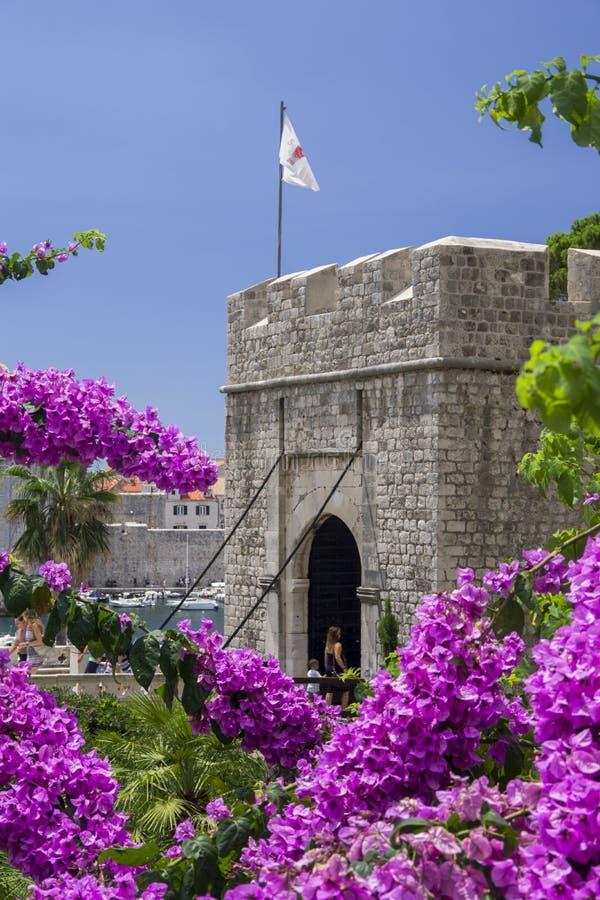 Dubrovnik, Croacia, vista lateral del ` del  e de PloÄ del ` de la puerta con la floración de la buganvilla fotos de archivo libres de regalías