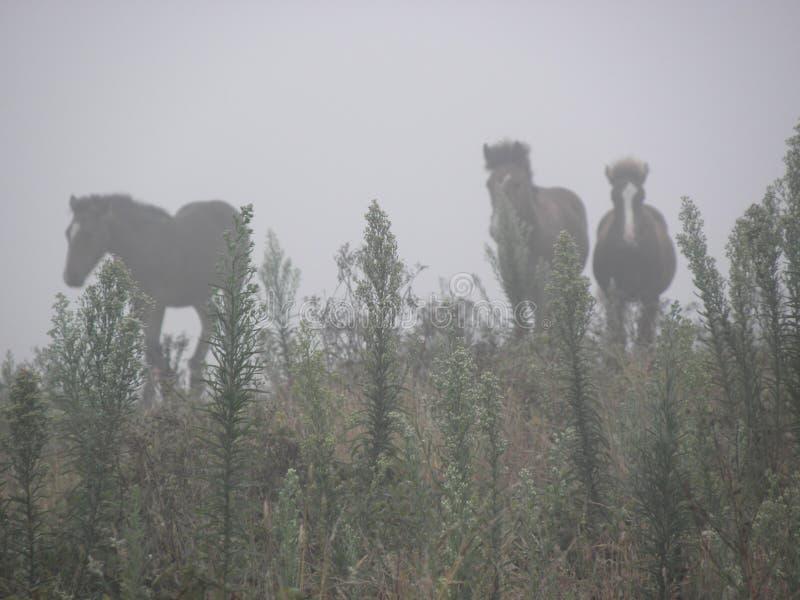 Duchów konie w mgle fotografia stock