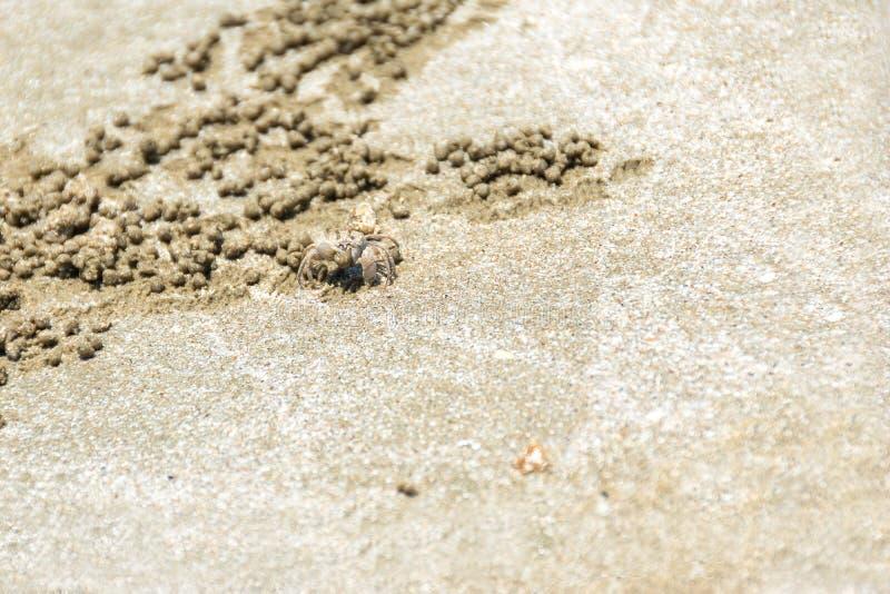 Ducha krab tworzył małą piasek piłkę podczas gdy kopiący swój norę fotografia royalty free