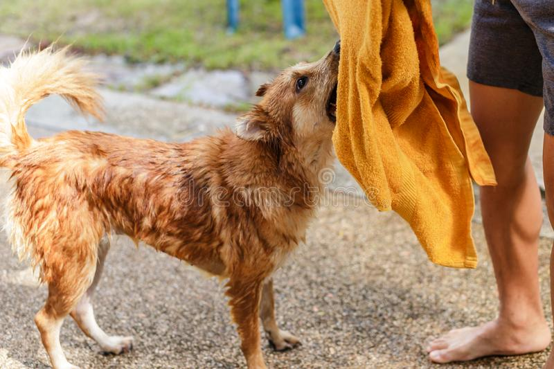 Ducha y limpiar un perro en el jardín fotografía de archivo